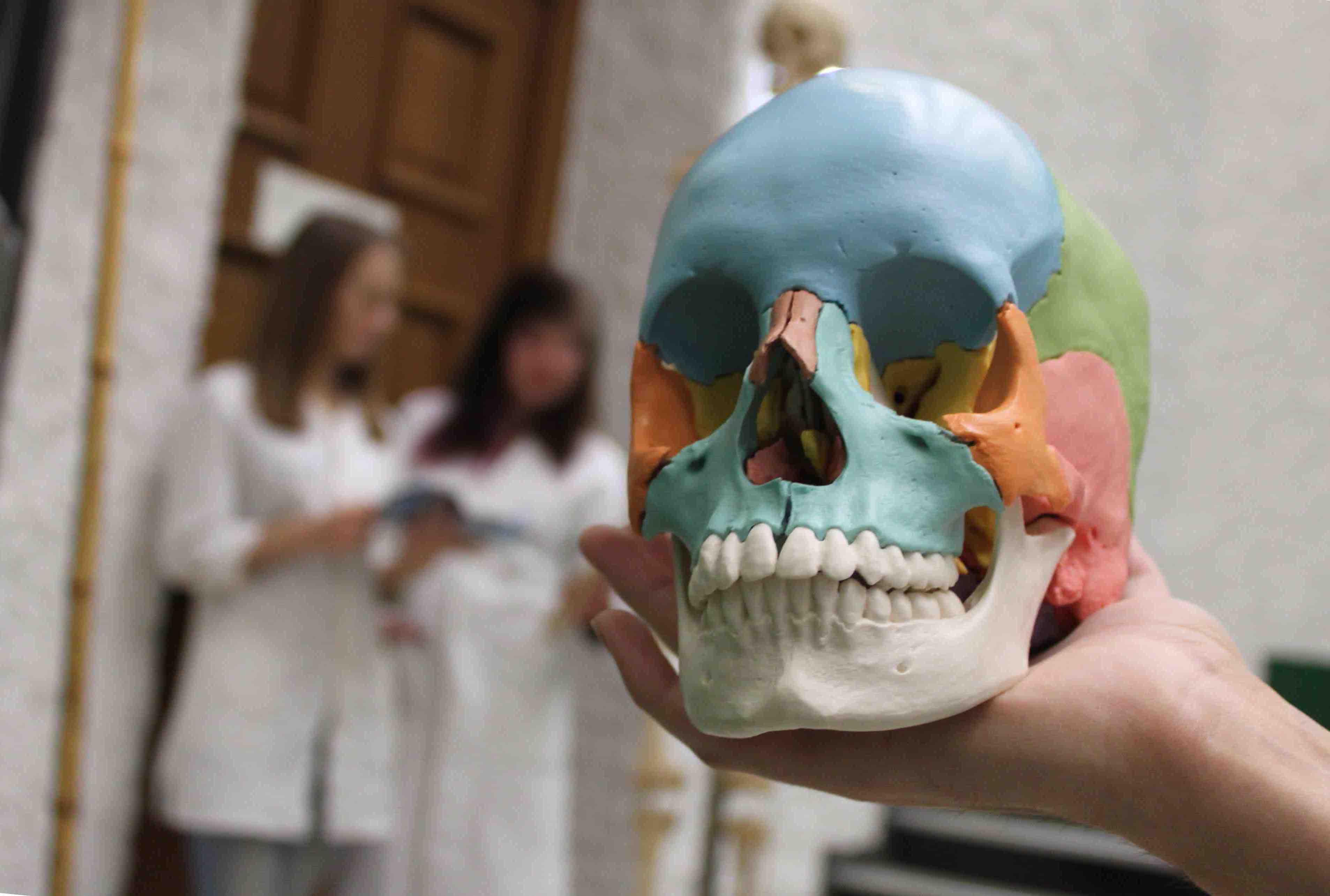Wege zum studium der medizin und zahnmedizin vom problem for Studieren im ausland